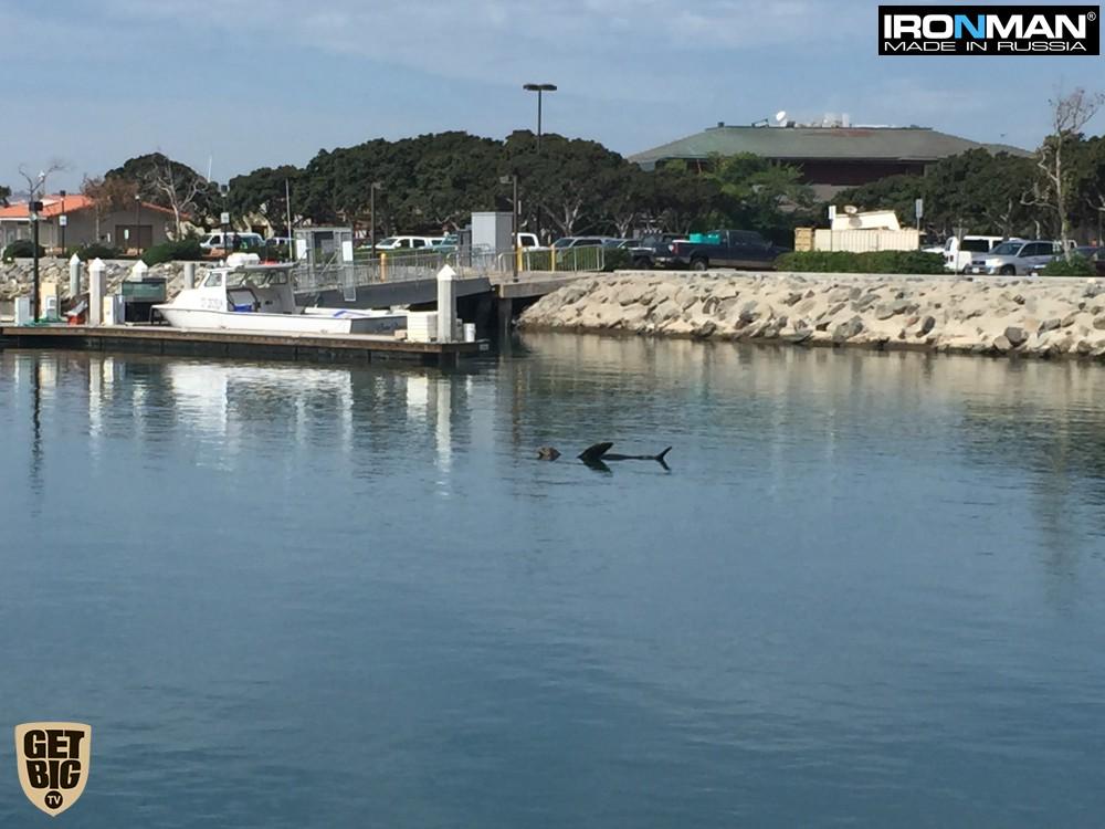 Морской котик рядом с авианосцем Мидвей